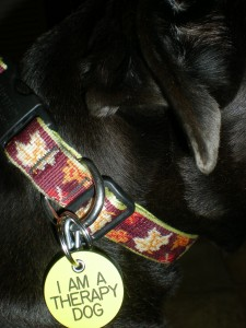 Image of therapy dog tag