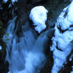 Scenes of December: Images of Snow, Water, Dogs, and Ghosts of Old Growth Forests