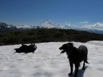 Dogs in Nature: North Cascades